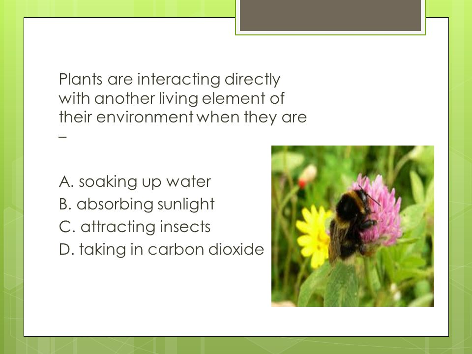 Plants are interacting directly with another living element of their environment when they are – A.