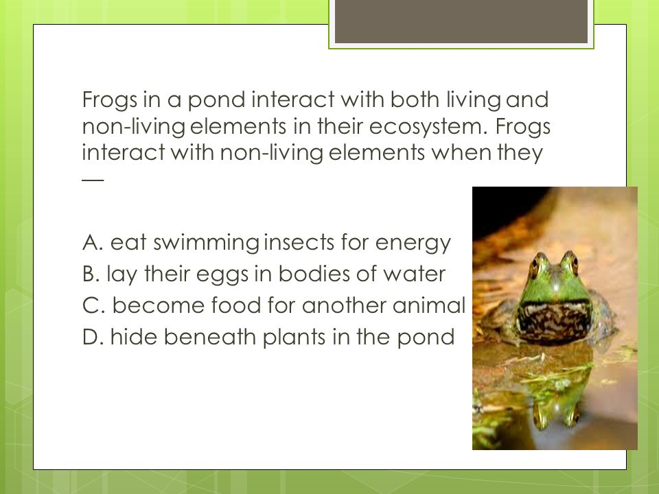 Frogs in a pond interact with both living and non-living elements in their ecosystem.