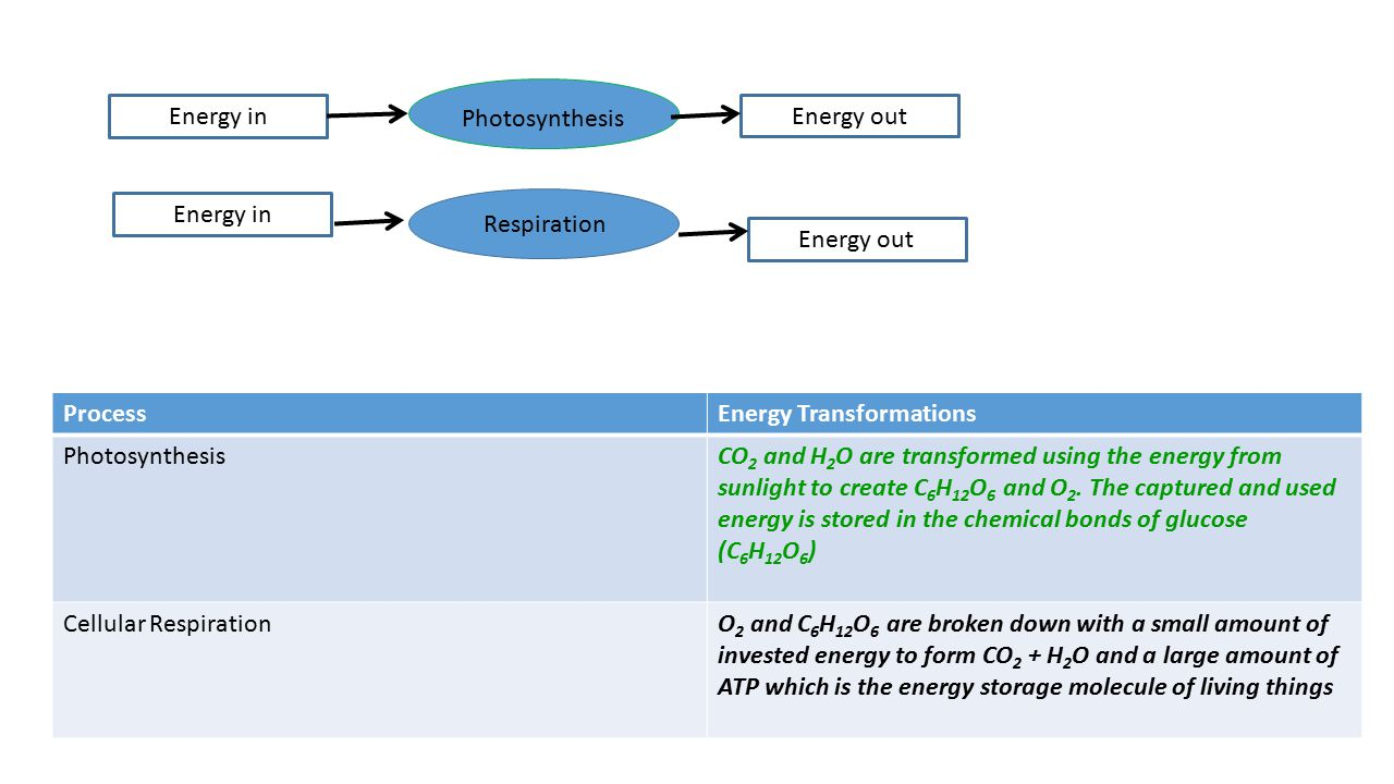 Energy in Photosynthesis. Energy out. Energy in. Respiration. Energy out. Process. Energy Transformations.