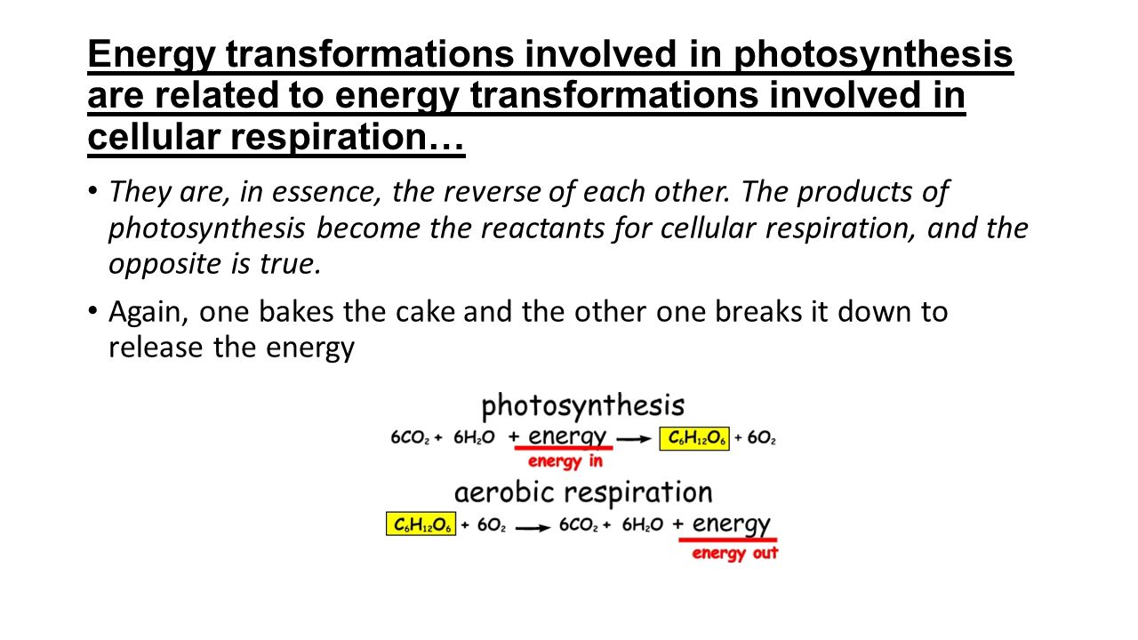 Energy transformations involved in photosynthesis are related to energy transformations involved in cellular respiration…