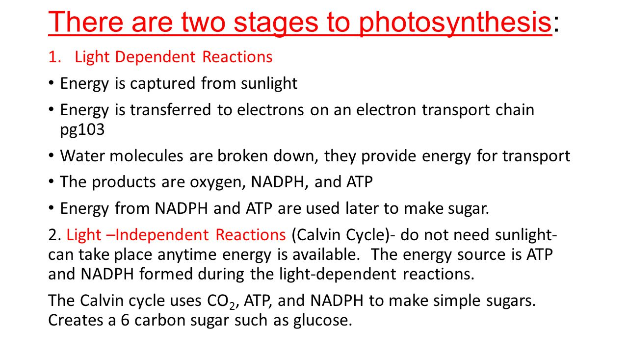 There are two stages to photosynthesis: