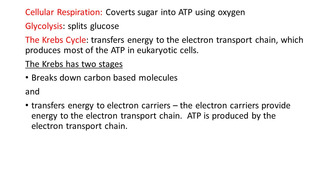 Cellular Respiration: Coverts sugar into ATP using oxygen