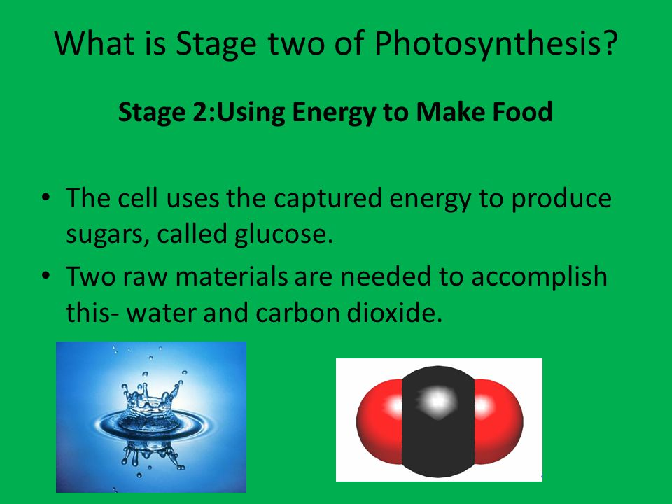 What is Stage two of Photosynthesis