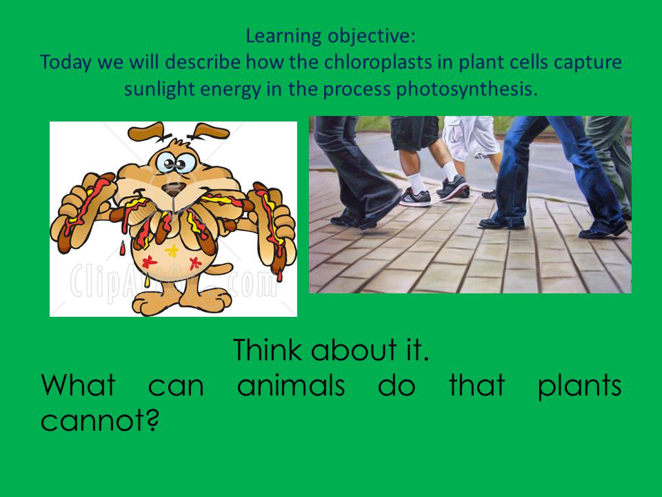 What can animals do that plants cannot