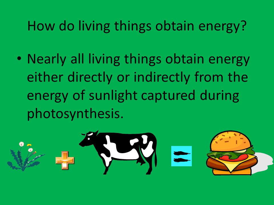 How do living things obtain energy