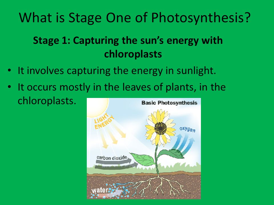 What is Stage One of Photosynthesis