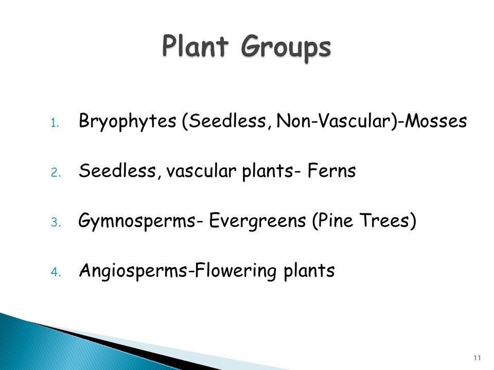 Plant Groups Bryophytes (Seedless, Non-Vascular)-Mosses