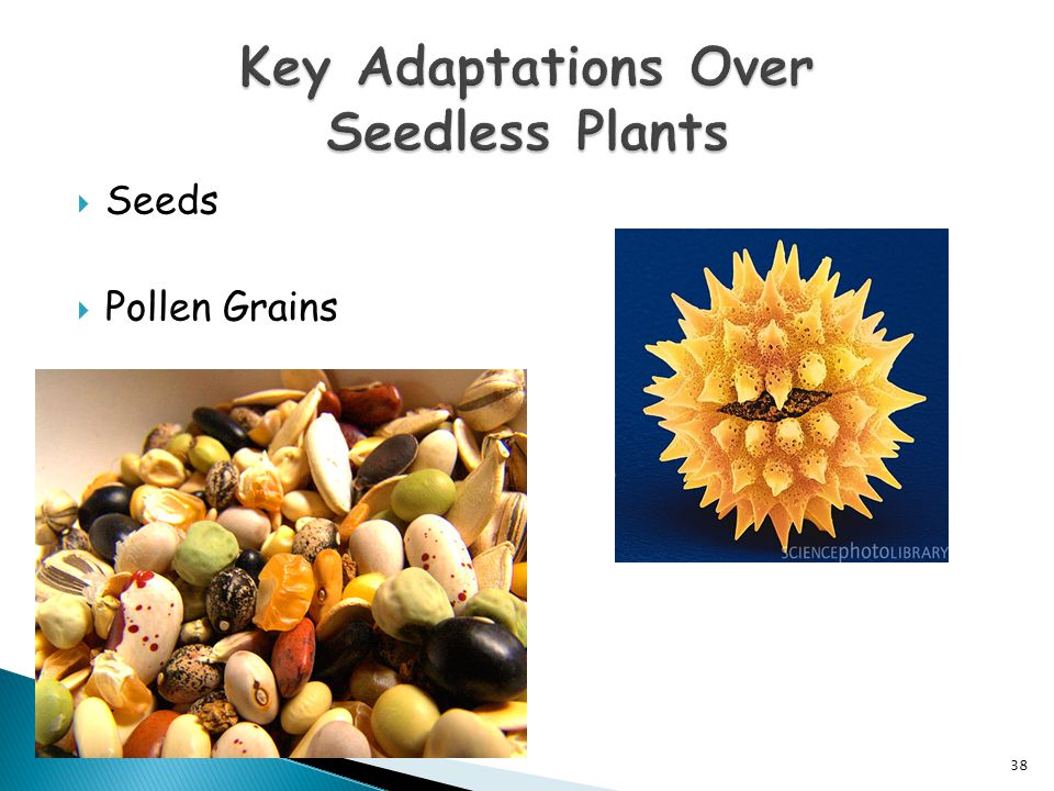 Key Adaptations Over Seedless Plants