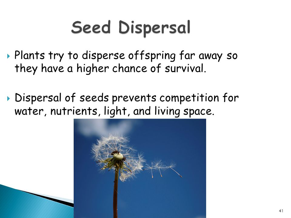 Seed Dispersal Plants try to disperse offspring far away so they have a higher chance of survival.