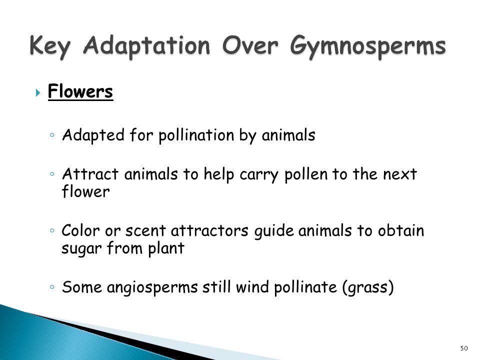 Key Adaptation Over Gymnosperms