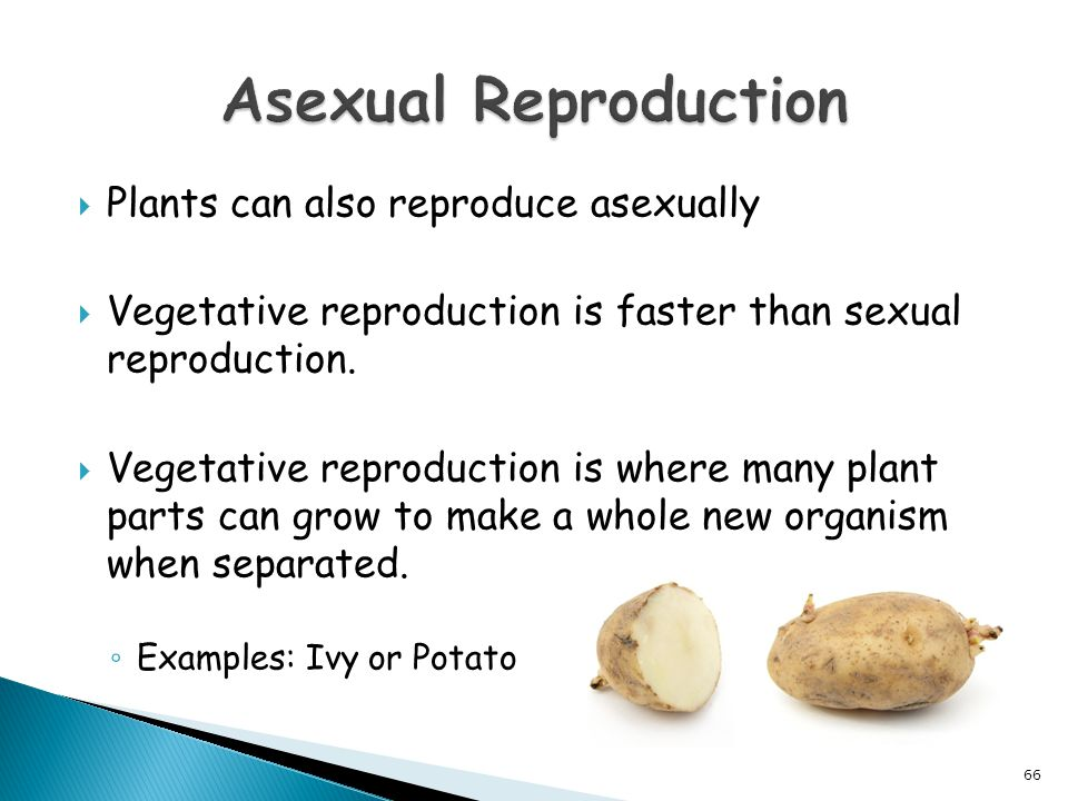 Asexual Reproduction Plants can also reproduce asexually