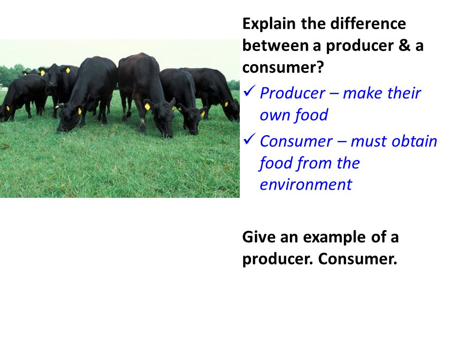 Explain the difference between a producer & a consumer