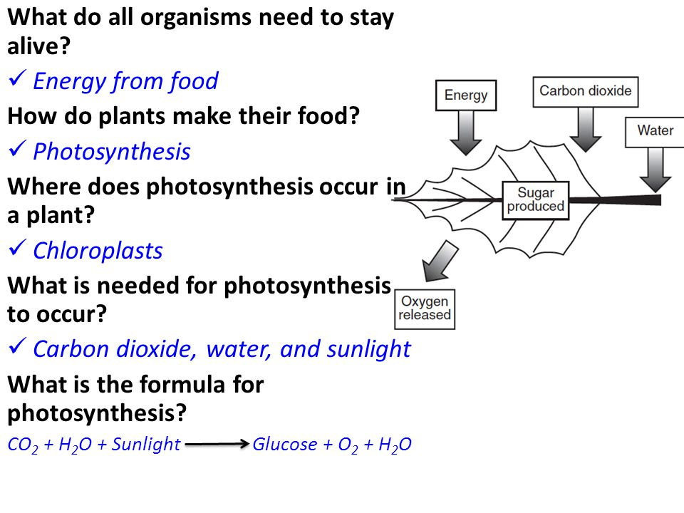 What do all organisms need to stay alive Energy from food