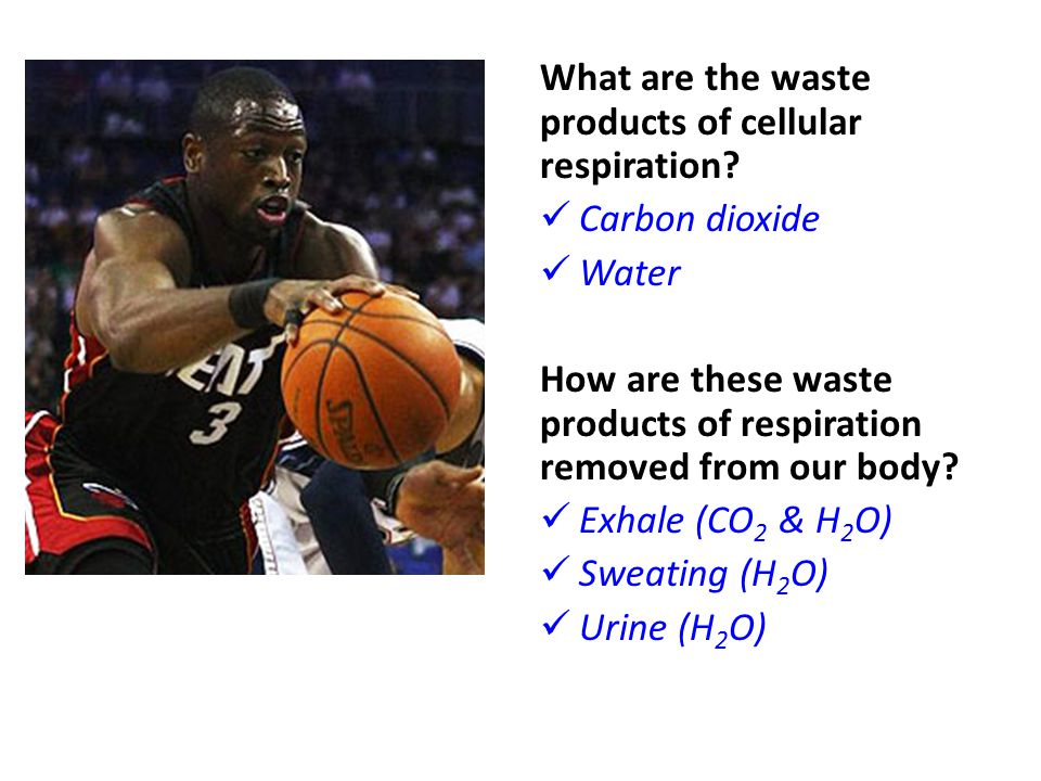 What are the waste products of cellular respiration