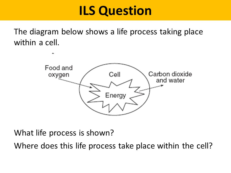 ILS Question The diagram below shows a life process taking place within a cell. What life process is shown