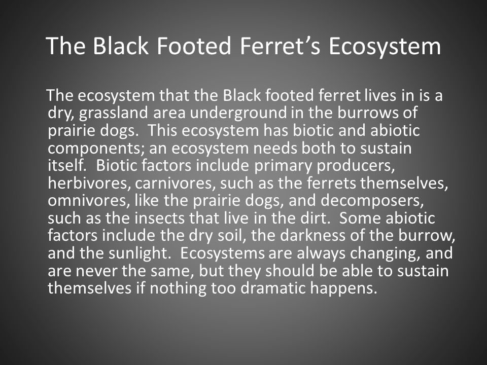 The Black Footed Ferret's Ecosystem