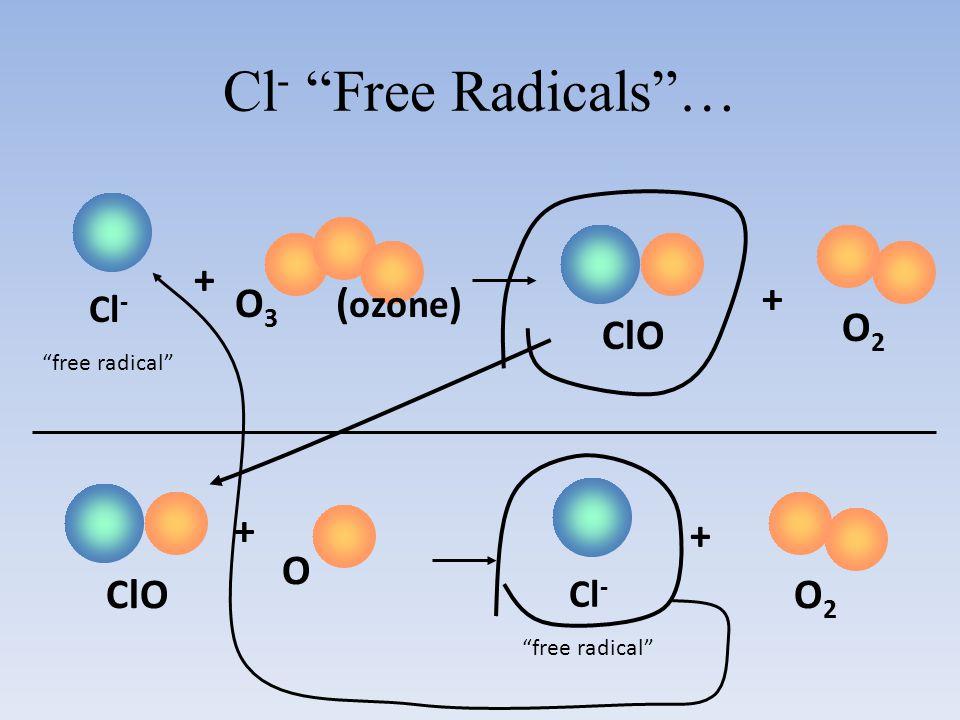Cl- Free Radicals … O3 (ozone) ClO O2 + + ClO O2 + O + Cl- Cl-