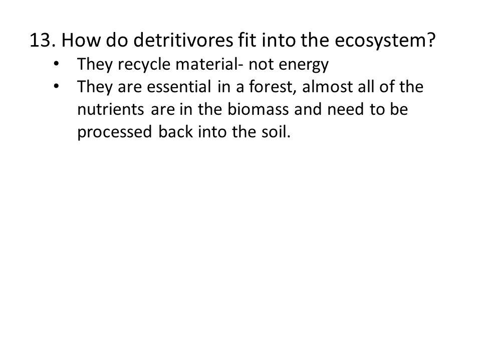 13. How do detritivores fit into the ecosystem