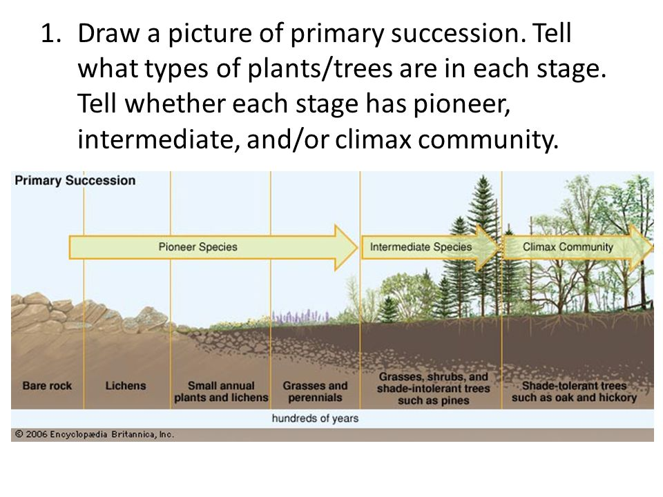 Draw a picture of primary succession