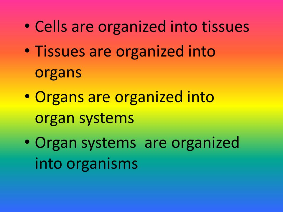 Cells are organized into tissues