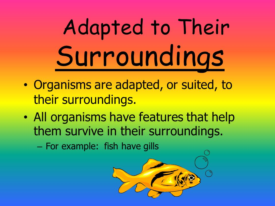 Adapted to Their Surroundings