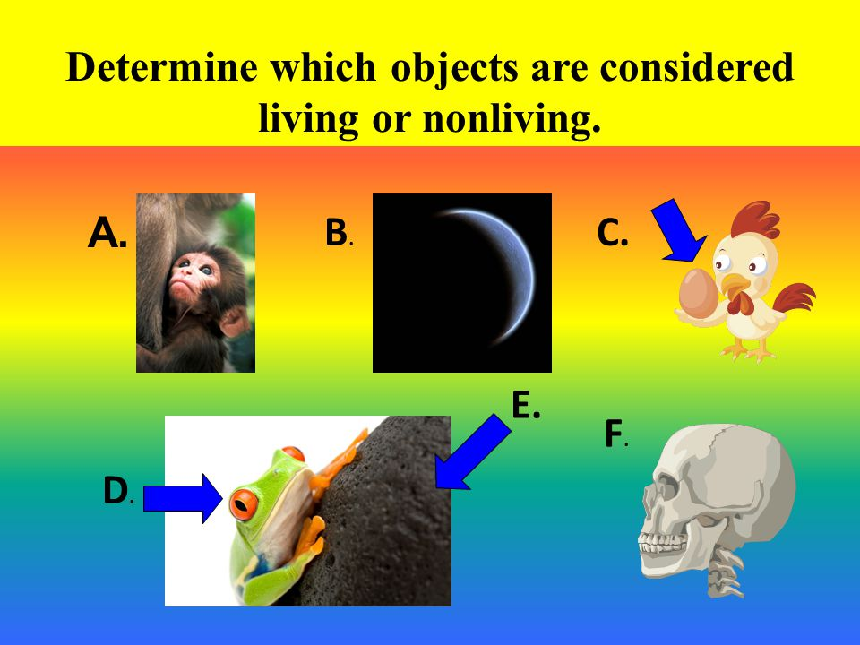 Determine which objects are considered living or nonliving.