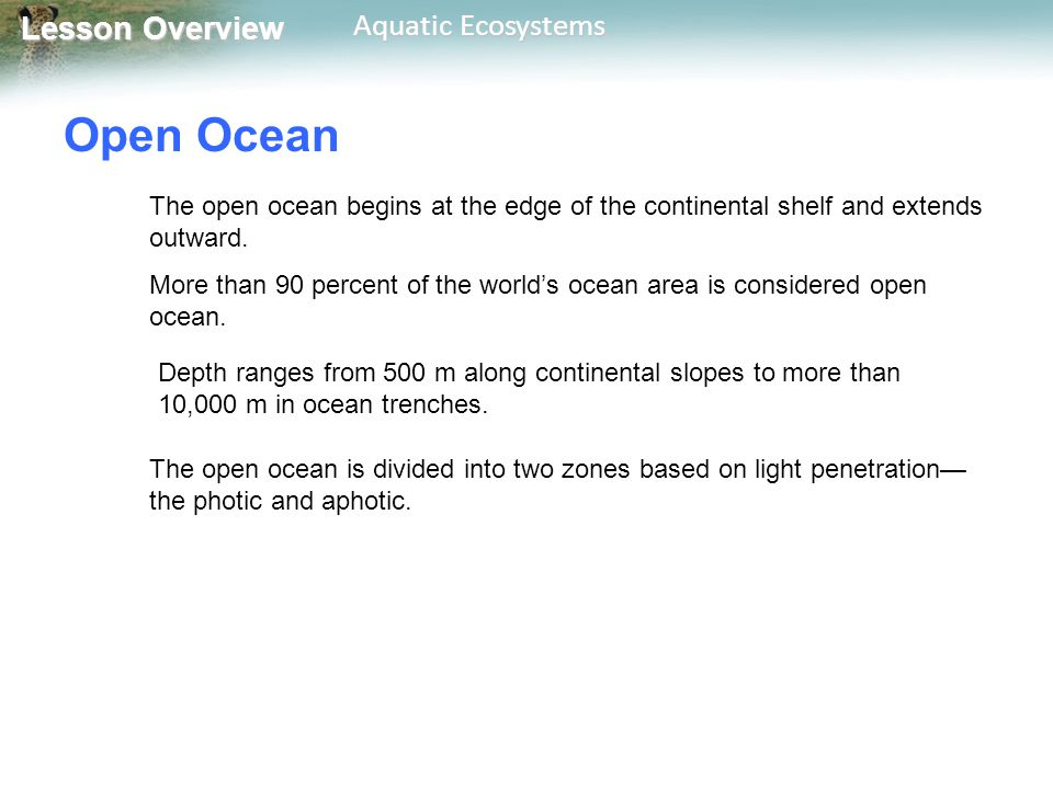 Open Ocean The open ocean begins at the edge of the continental shelf and extends outward.