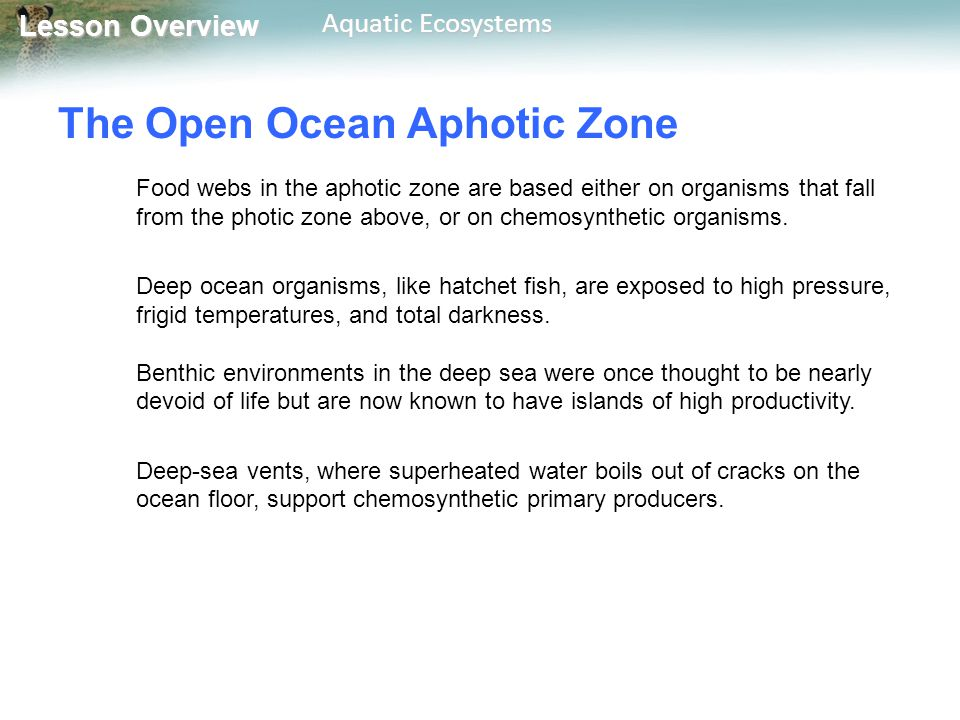 The Open Ocean Aphotic Zone