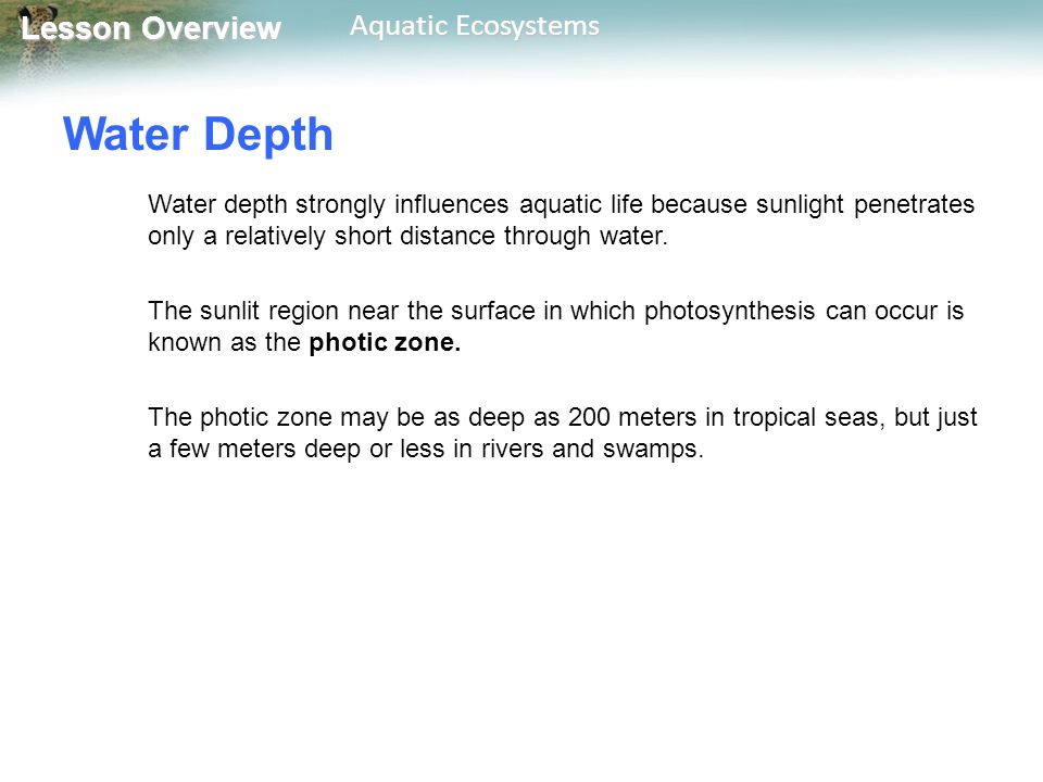 Water Depth Water depth strongly influences aquatic life because sunlight penetrates only a relatively short distance through water.
