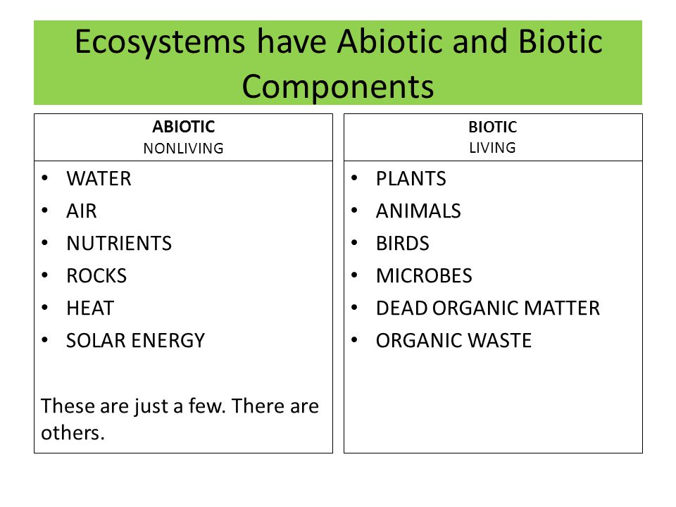 Ecosystems have Abiotic and Biotic Components