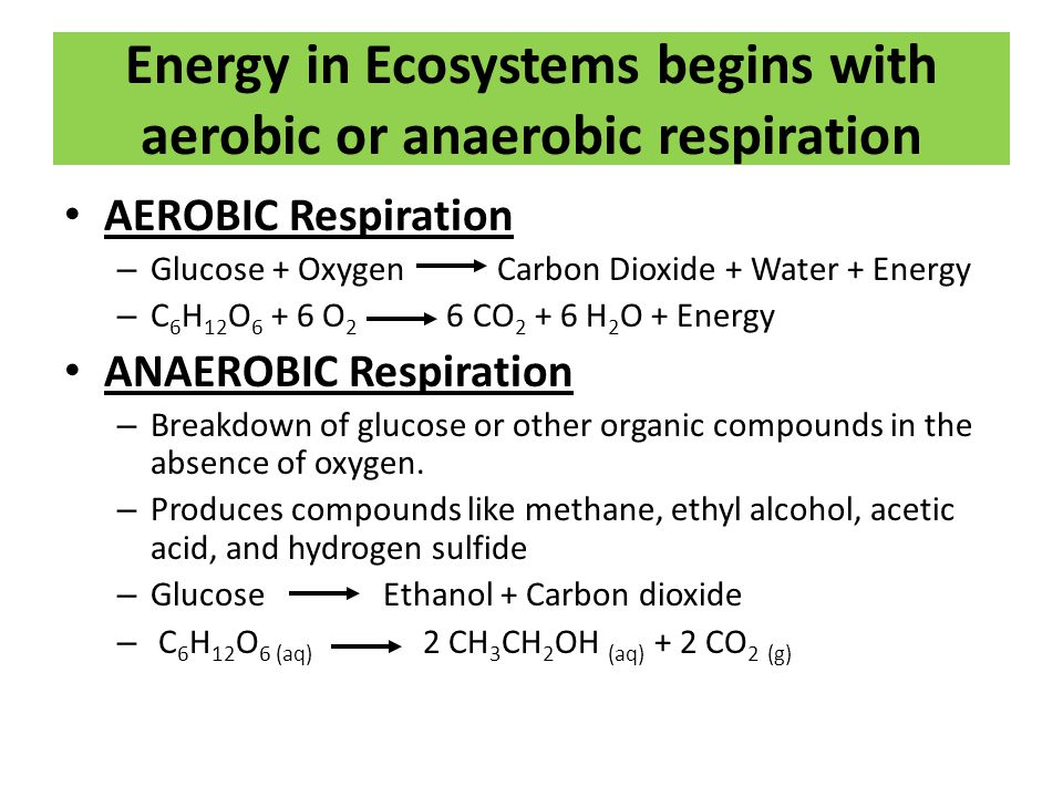 Energy in Ecosystems begins with aerobic or anaerobic respiration