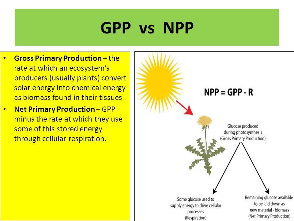 GPP vs NPP