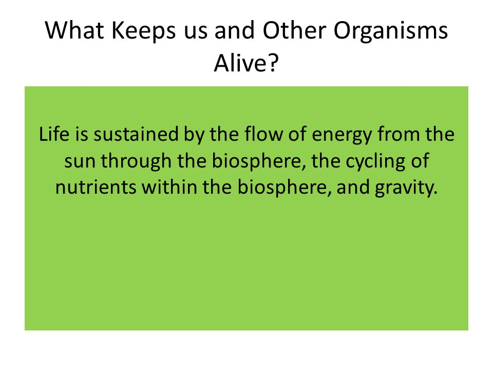 What Keeps us and Other Organisms Alive