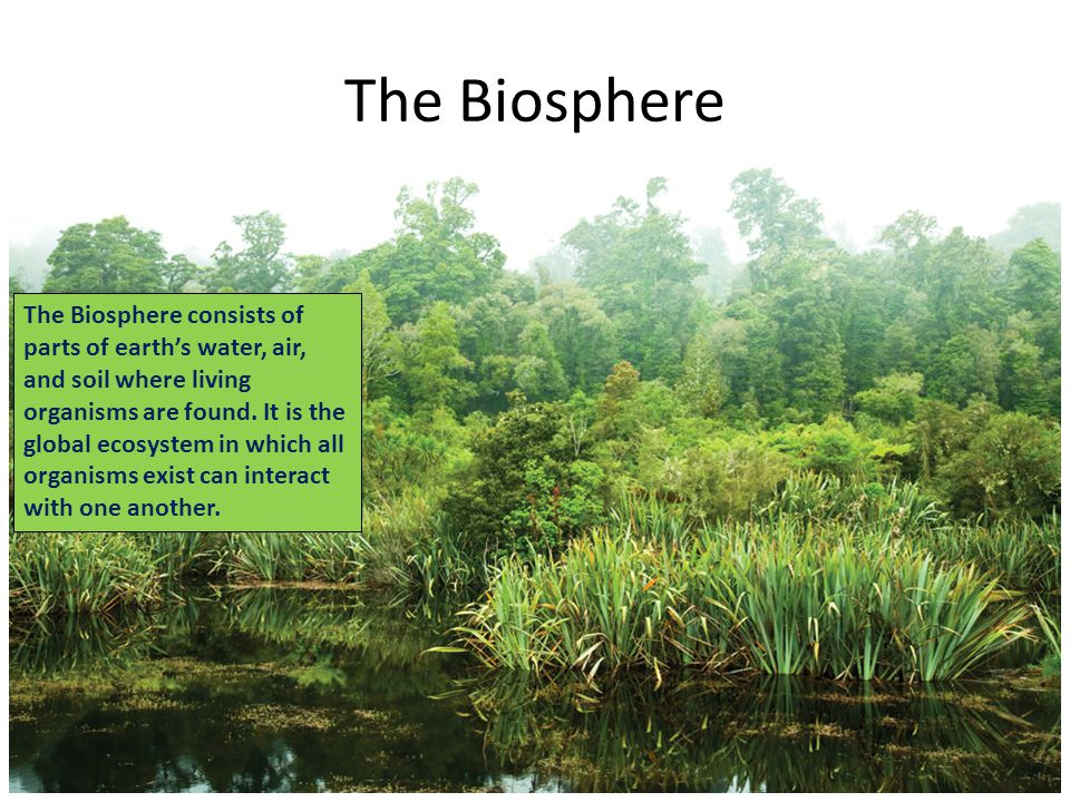 Ecosystems what are they and how do they work ppt for Living things found in soil