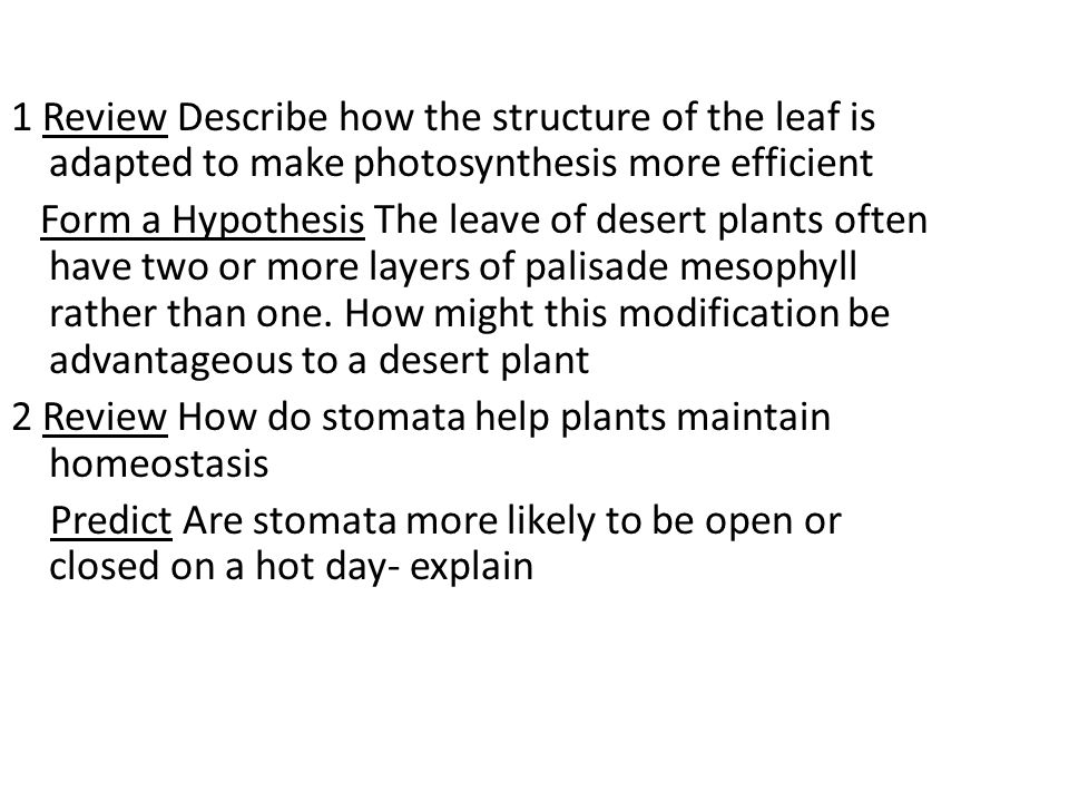 1 Review Describe how the structure of the leaf is adapted to make photosynthesis more efficient Form a Hypothesis The leave of desert plants often have two or more layers of palisade mesophyll rather than one.