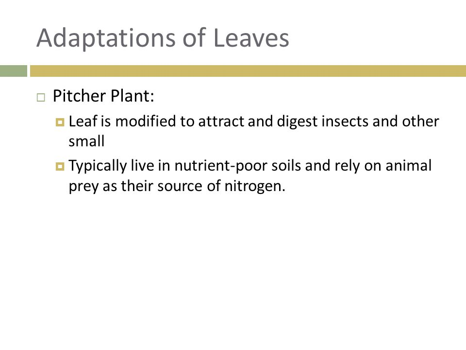 Adaptations of Leaves Pitcher Plant: