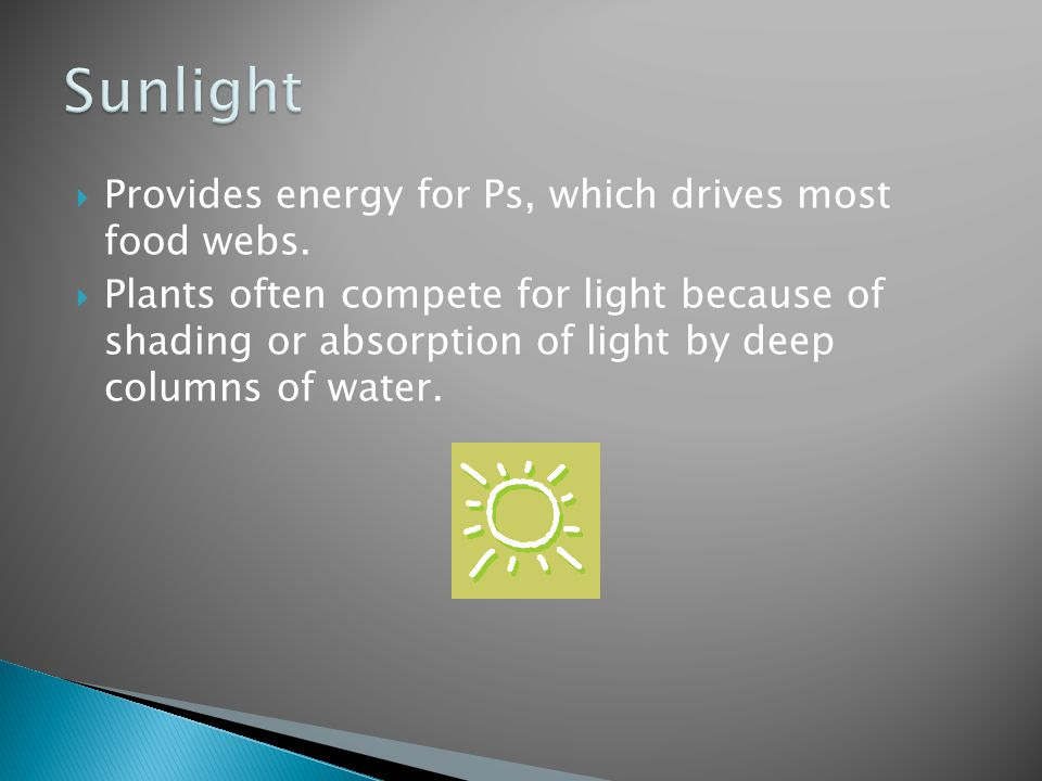 Sunlight Provides energy for Ps, which drives most food webs.