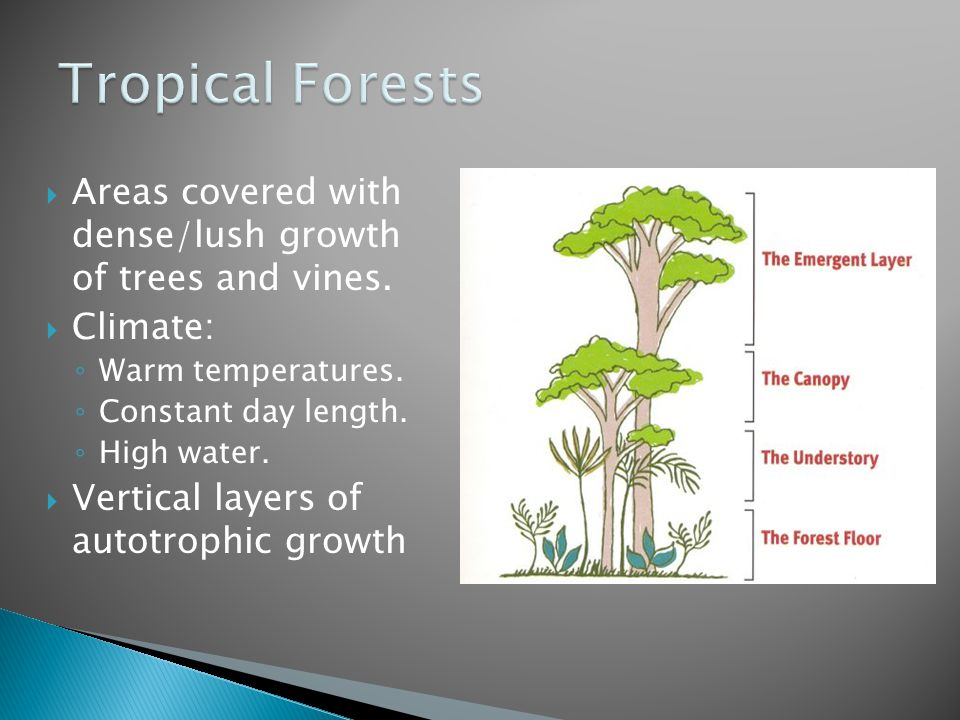 Tropical Forests Areas covered with dense/lush growth of trees and vines. Climate: Warm temperatures.