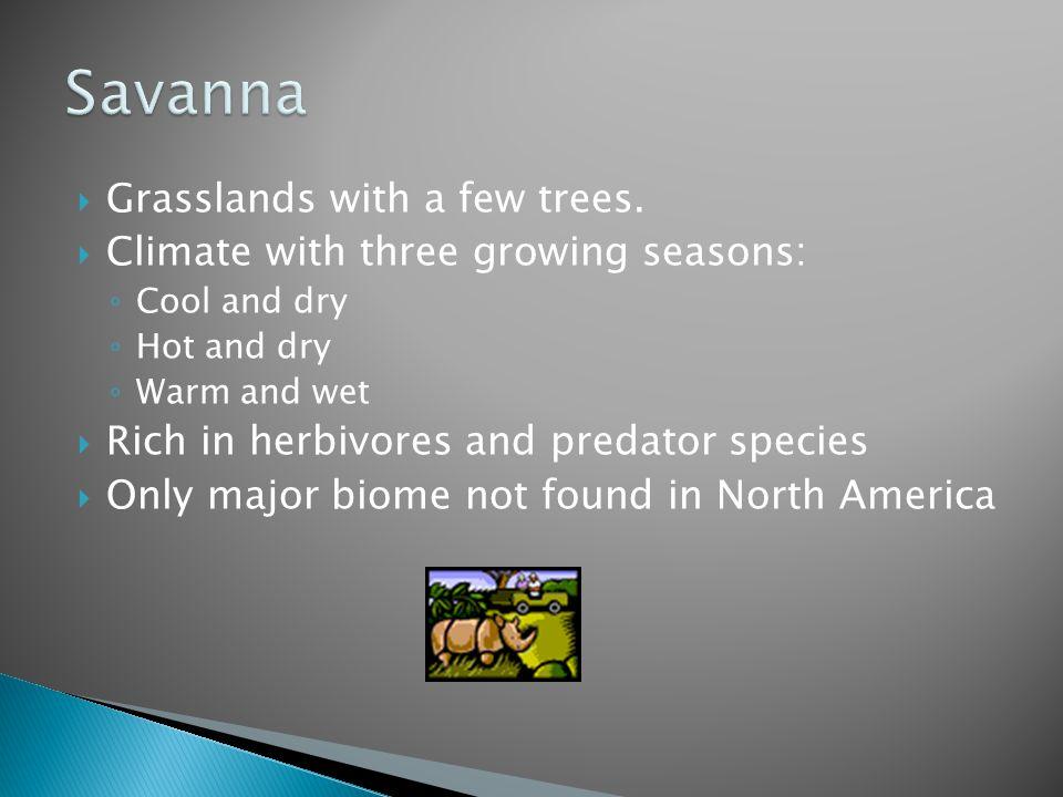 Savanna Grasslands with a few trees.