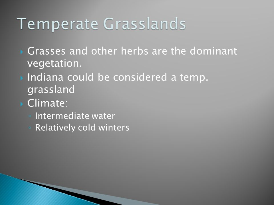 Temperate Grasslands Grasses and other herbs are the dominant vegetation. Indiana could be considered a temp. grassland.