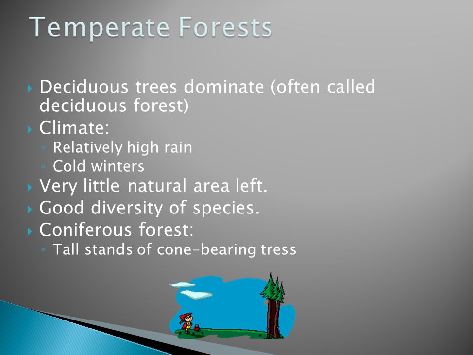 Temperate Forests Deciduous trees dominate (often called deciduous forest) Climate: Relatively high rain.