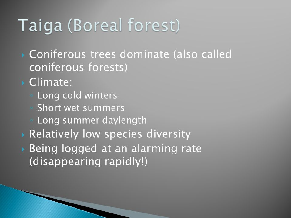 Taiga (Boreal forest) Coniferous trees dominate (also called coniferous forests) Climate: Long cold winters.
