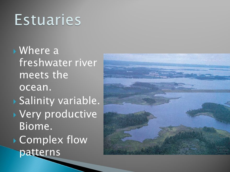 Estuaries Where a freshwater river meets the ocean. Salinity variable.