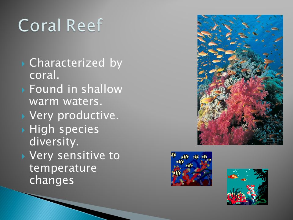 Coral Reef Characterized by coral. Found in shallow warm waters.