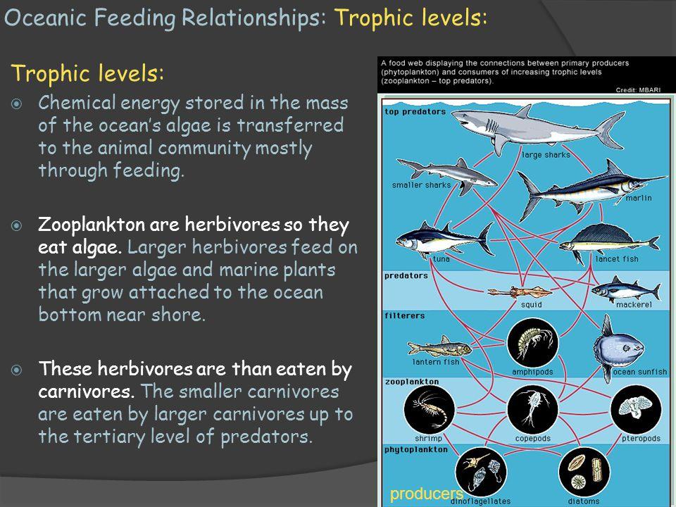 Oceanic Feeding Relationships: Trophic levels: