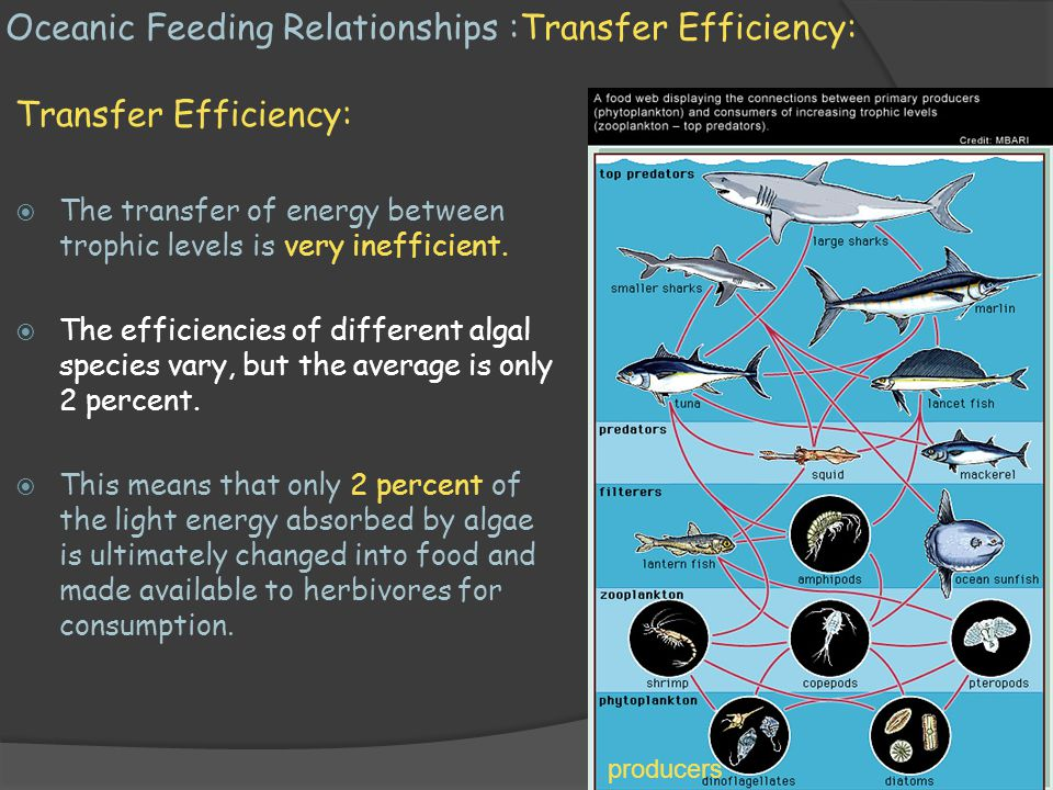 Oceanic Feeding Relationships :Transfer Efficiency:
