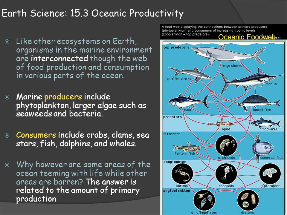 Earth Science: 15.3 Oceanic Productivity