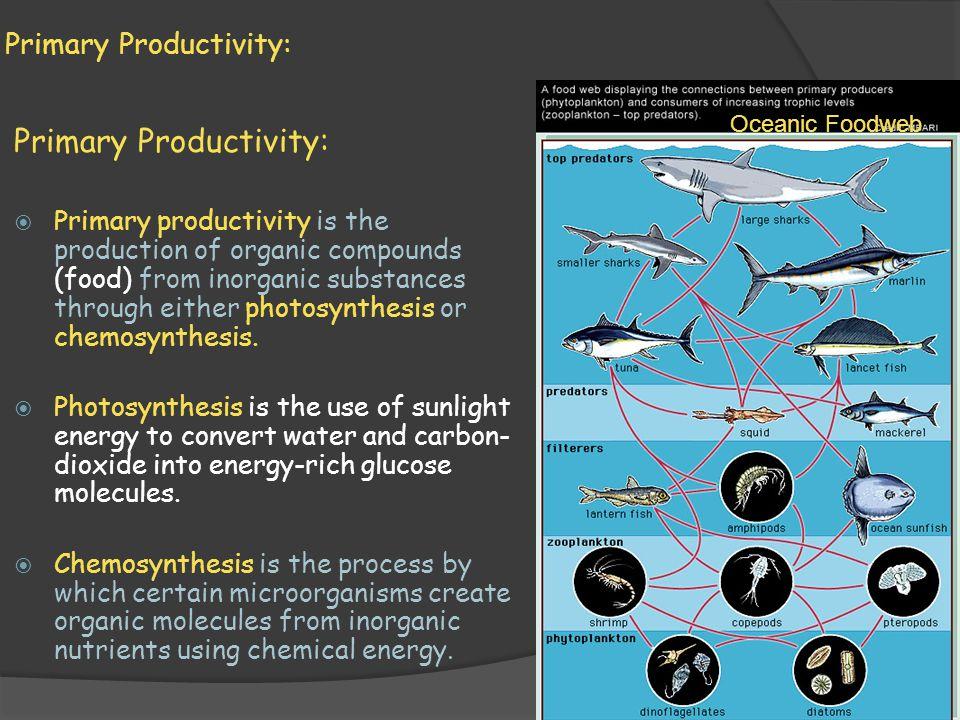 Primary Productivity: