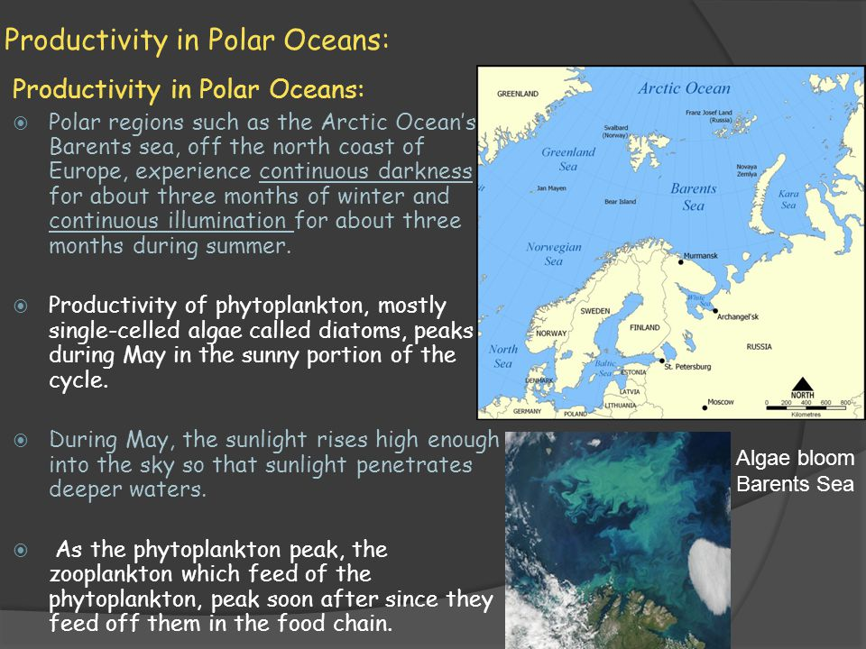 Productivity in Polar Oceans: