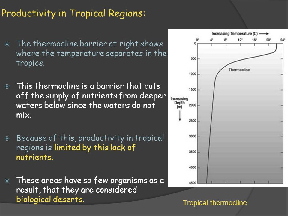 Productivity in Tropical Regions: